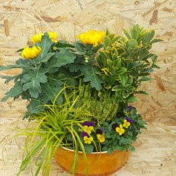 Composition de 5 plantes