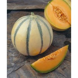 Melon - Ardor