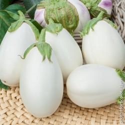 Aubergine - clara