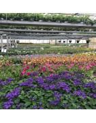Plantes à balcon et jardin