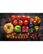 Tomates hatives (pot Ф14cm)